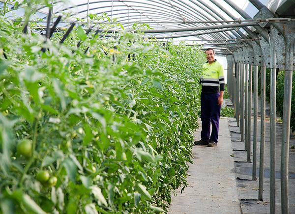 trabajo-horticultura-indesa-2010
